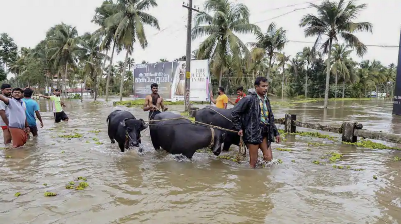 How I built Helpline Kerala and contributed to flood relief