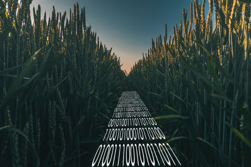 How to find your way through the corn maze of software development
