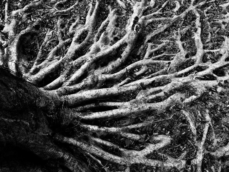 How to tackle root finding in JavaScript