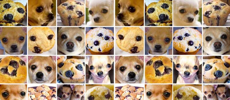 Chihuahua or muffin? My search for the best computer vision API