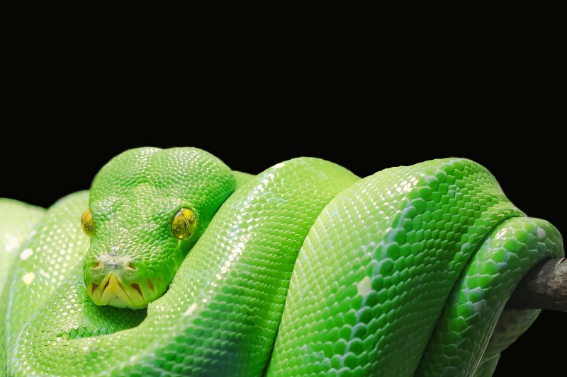 If you have slow loops in Python, you can fix it…until you can't